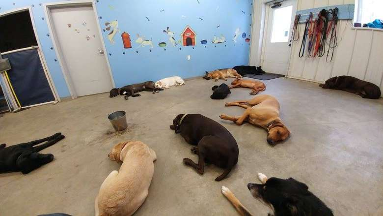10 dogs laying on the floor
