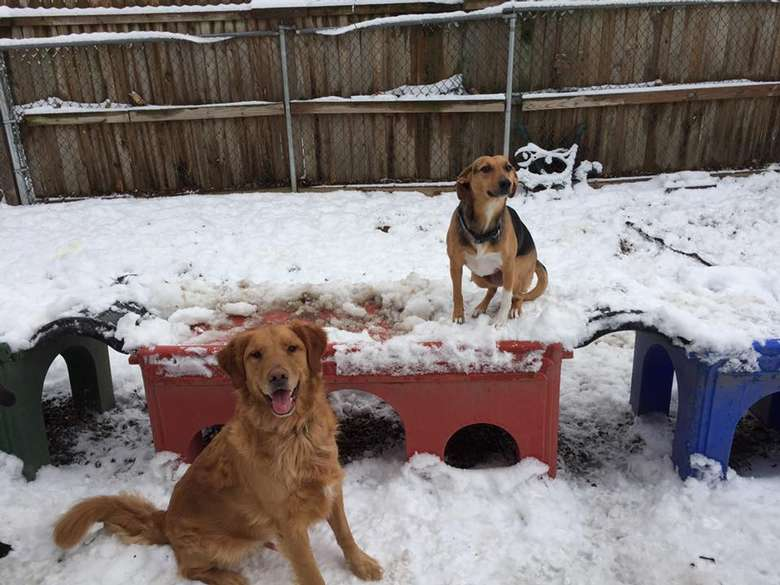 two dogs playing outside in the snow