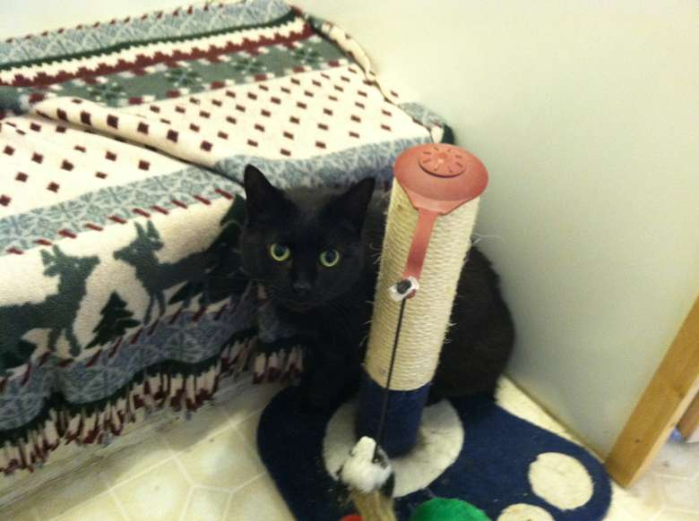black cat hiding behind a scratching post