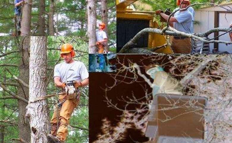 High Peaks Tree Removal, Inc. (1)