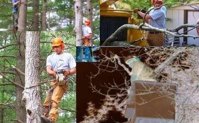 High Peaks Tree Removal, Inc.