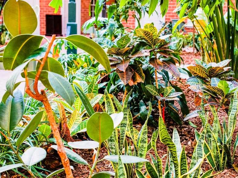 plants in a garden space