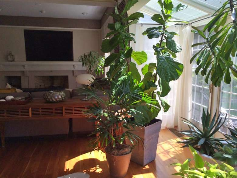 living room with tall, tropical plants