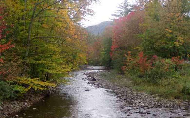 small river running through trees in the fall