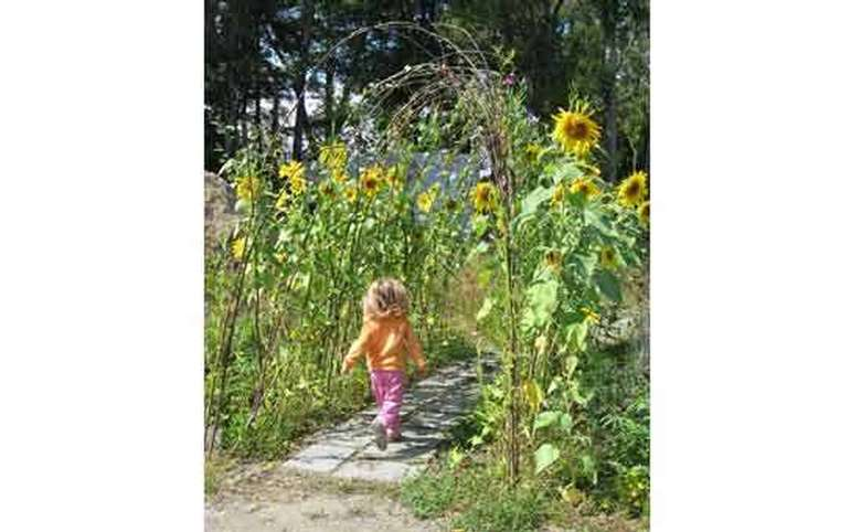 girl by sunflowers