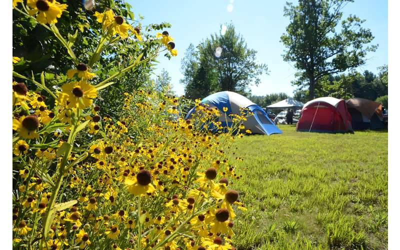 sunflowers in the foreground, camping tents set up in the background