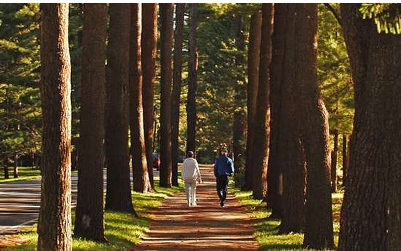 The Avenue of the Pines at Saratoga Spa State Park