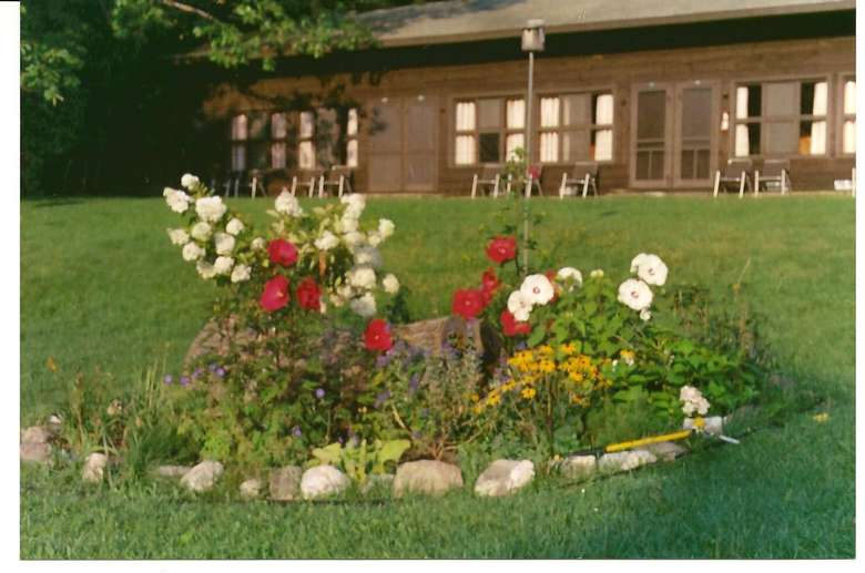 flowers on a lawn