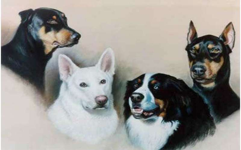 a portrait of four dogs, three have black coats and the other is pure white