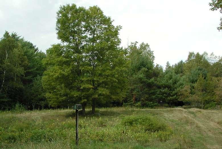 woods near vacation rental
