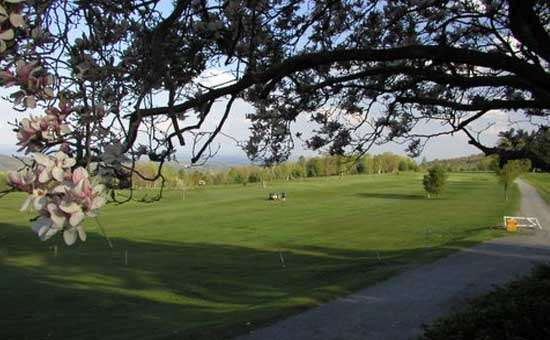 view of the green gold course shot through the overhanging branches of a flowering tree