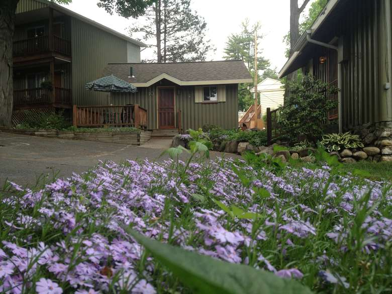 light purple flowers in foreground, small cottage in background