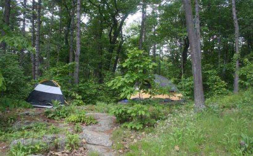two tents set up at a wooded campsite