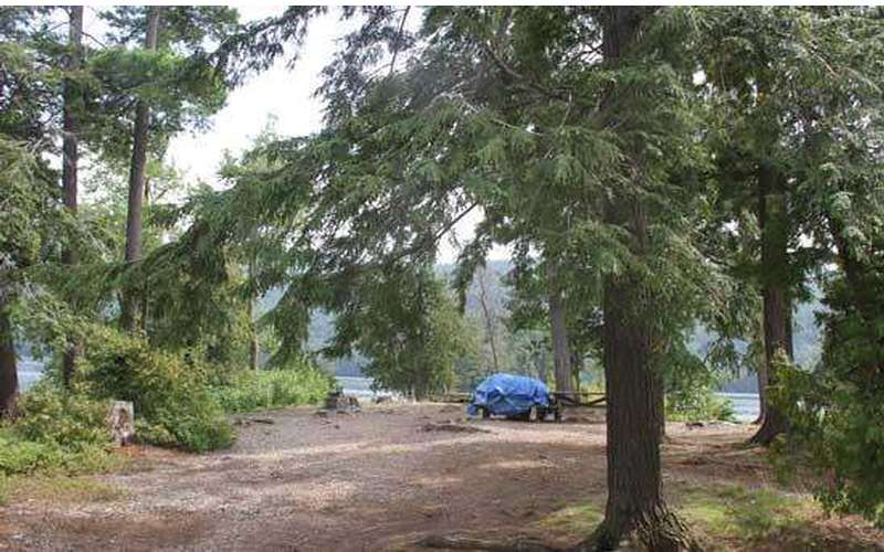 trees surrounding a campsite with a picnic table