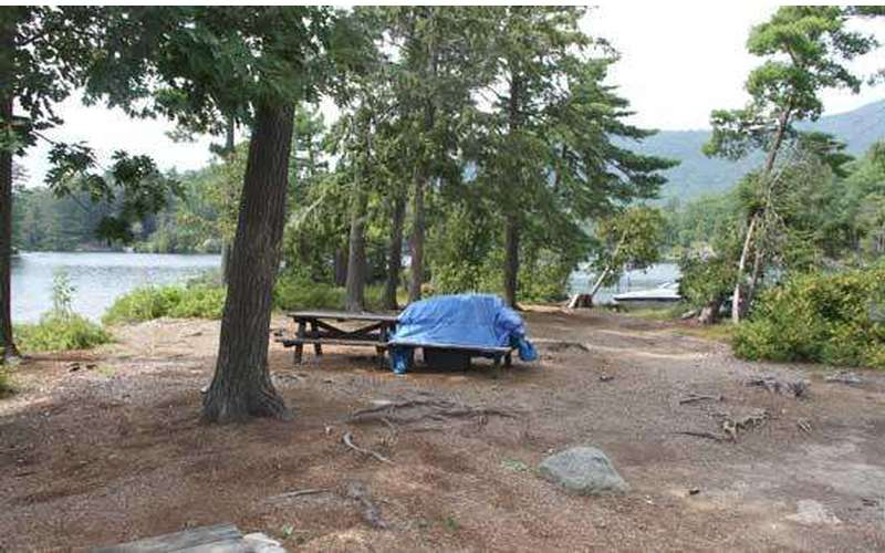 a somewhat bumpy campsite with roots and trees, plus picnic tables