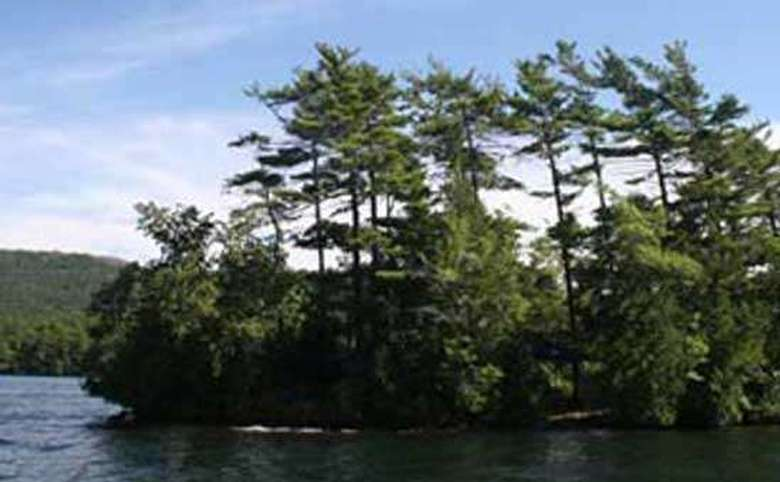 an island with tall green trees