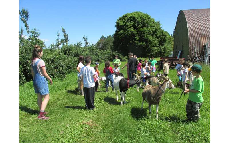 kids with farm animals outside on a green lawn