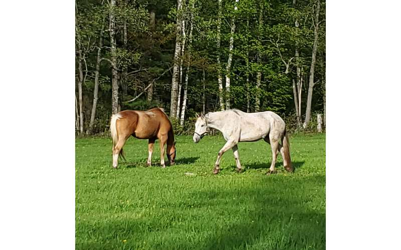 two horses on a grassy lawn