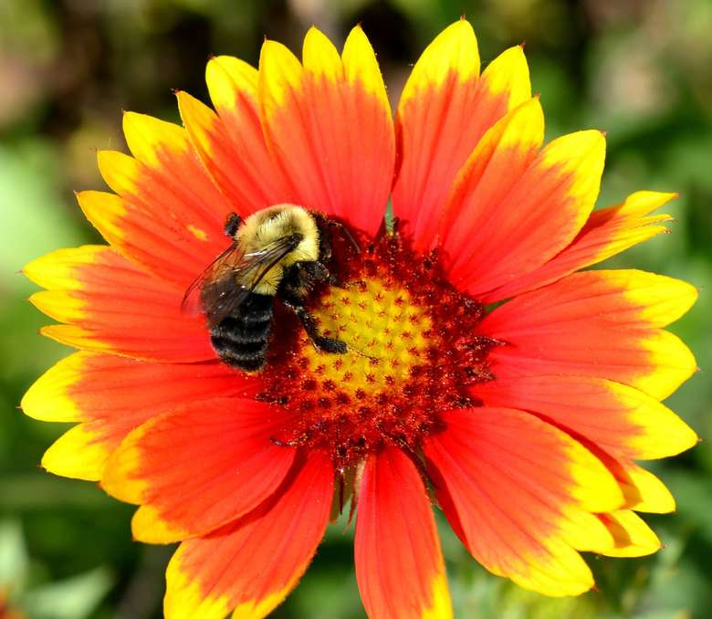 photo of bee on flower