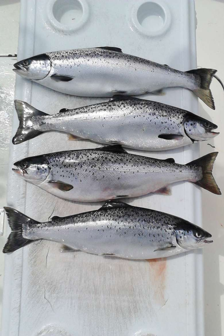 Four silver fish