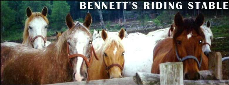 """Row of horses with words that say """"Bennett's Riding Stable"""""""