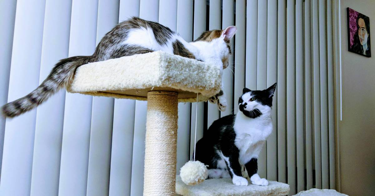 Pet Friendly Apartment Search: Find Pet Friendly Apartments In Albany