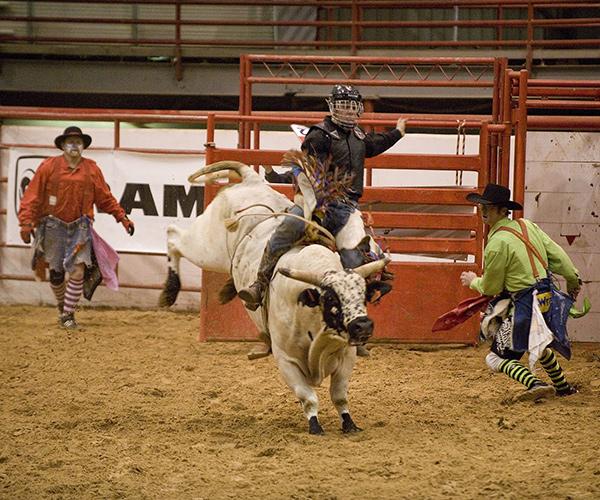 bull rider