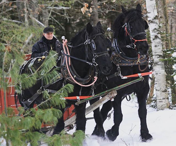 man directing a horse drawn sleigh ride