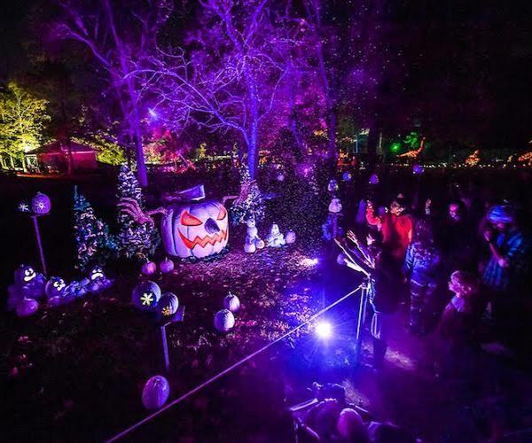 pumpkin glow event with purple lighting