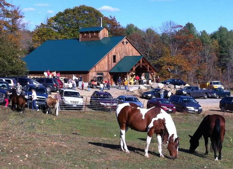 horses in field near cars