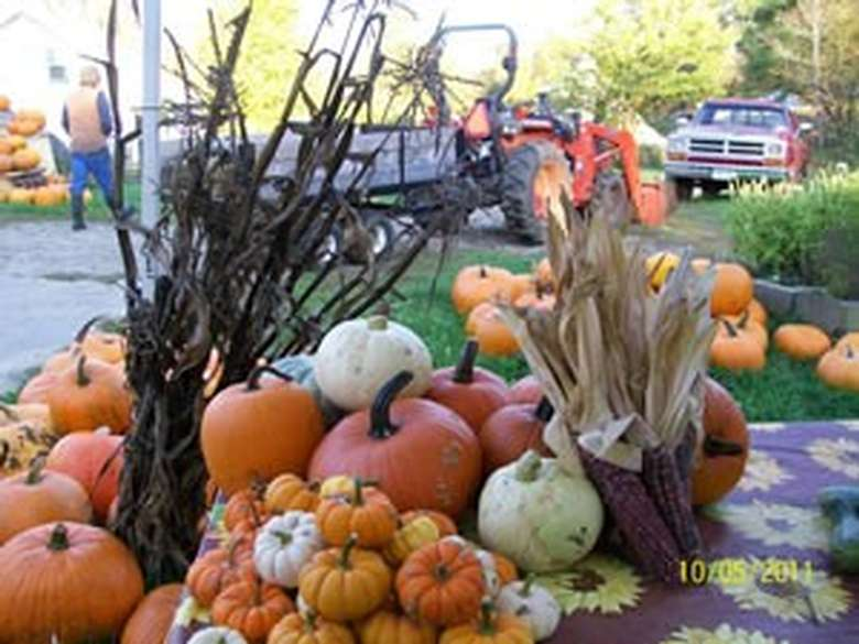 Fall produce at Whitefields Farm