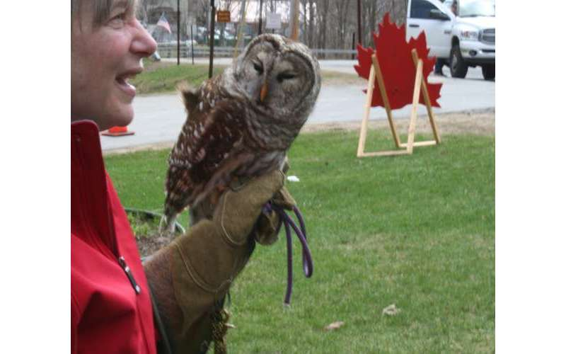 woman with owl on hand