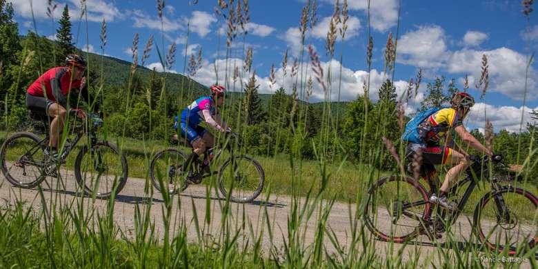 bike riders seen through tall grass