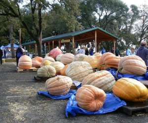 giant pumpkins showcased near a pavilion