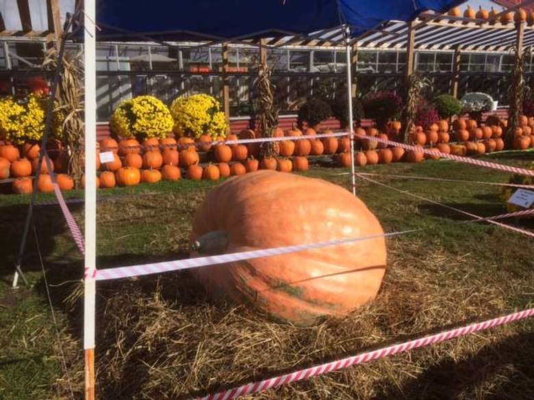 a giant orange pumpkin on display