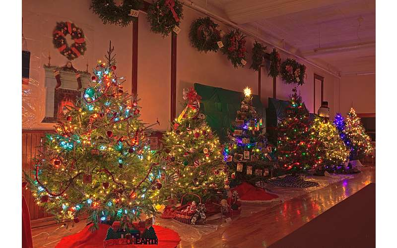 Photo of Festival of Trees