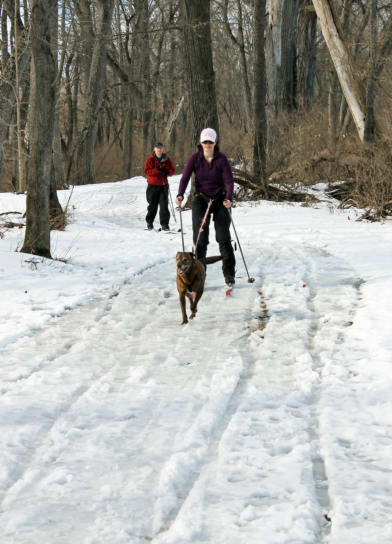 dog pulling woman on skis