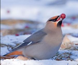 a bird with a berry