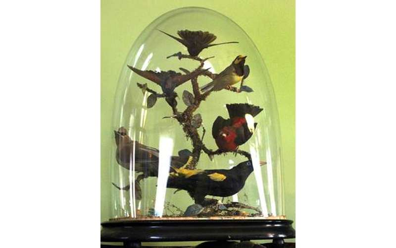 birds under a glass case