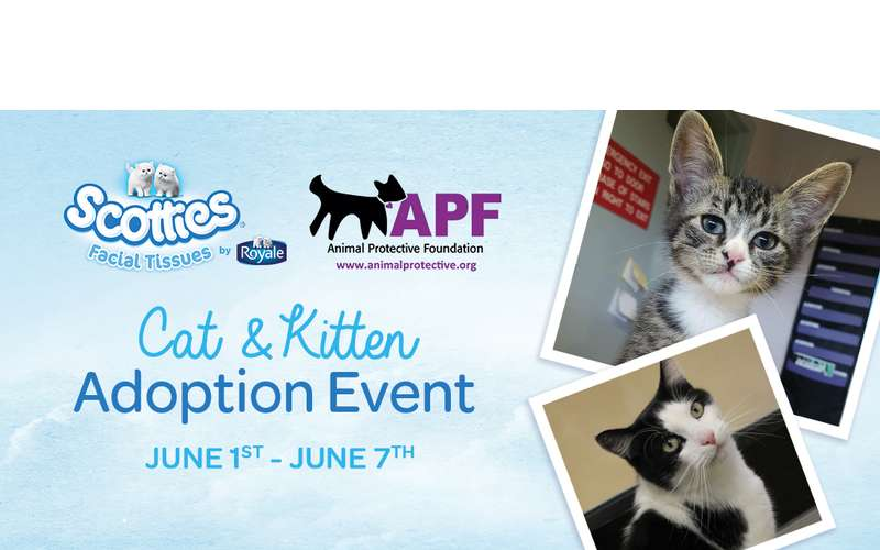 Cat Adoption Event East Bay