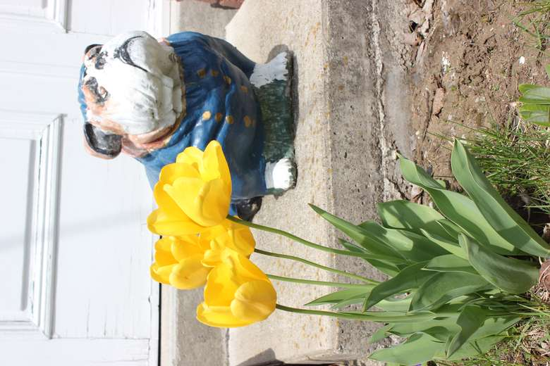 dog statue near plant