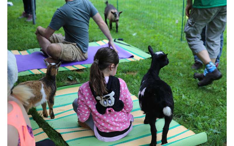 NY Goat Yoga In The Woods For Everyone (1)