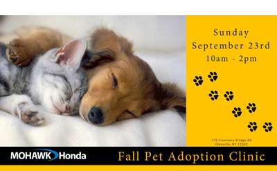 adoption clinic poster
