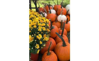 Photo of collection of pumpkins