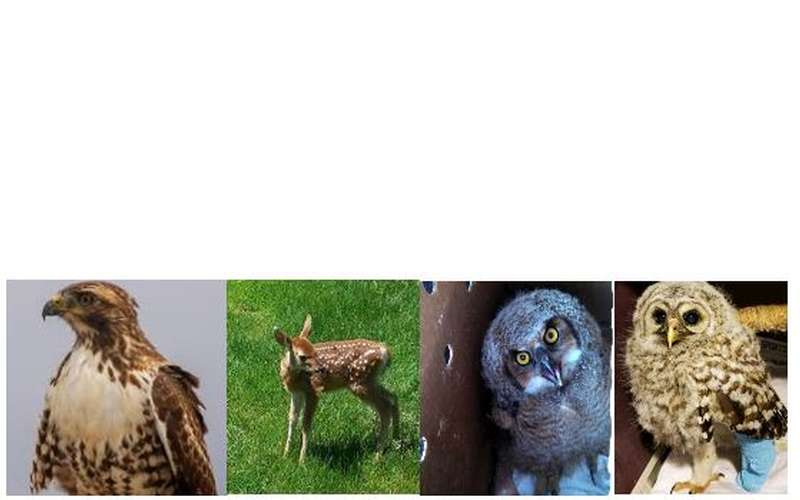 Photos of a bird, a deer, and two owls