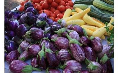 Photo of eggplants