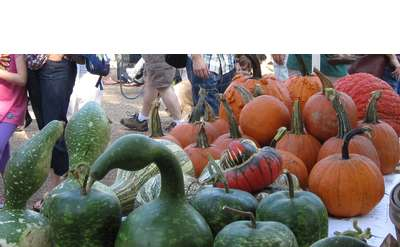 Photo of Gourds and Pumpkins