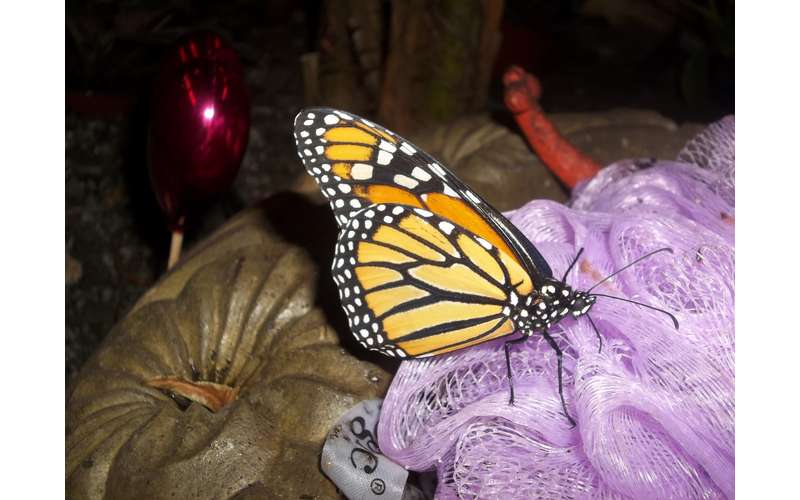 Butterflies & Blooms at miSci (1)