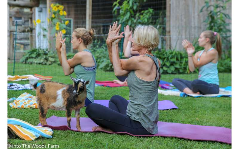 Goat Yoga In The Woods For Everyone (9)