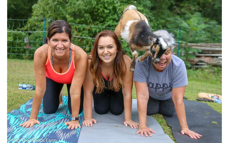 Goat Yoga In The Woods For Everyone (3)